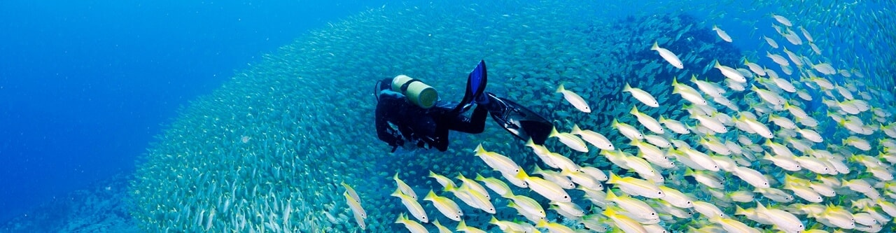 Diving Charters in Scottburgh, Natal South Africa and accommodation and shuttle services