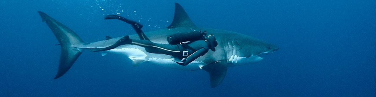 Diving Charters in Scottburgh, Natal South Africa