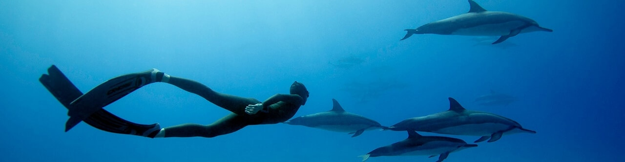 Diving Charters in Scottburgh, Natal South Africa and accommodation