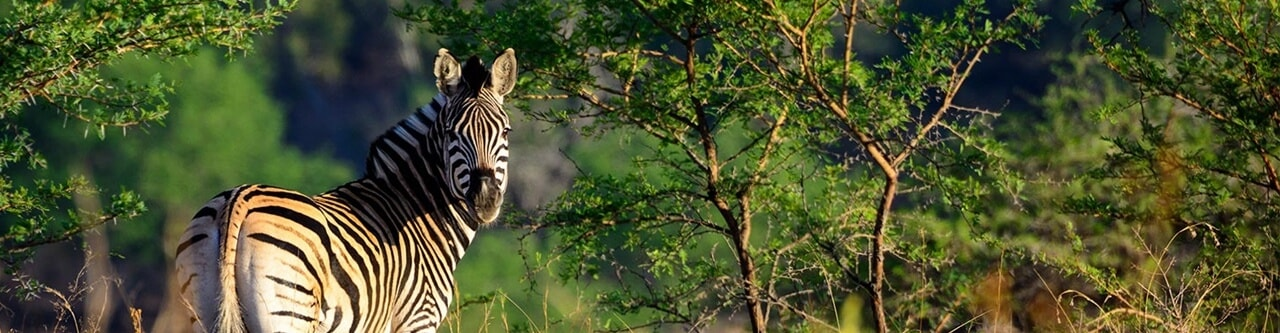Private Safari Charters in Natal South Africa