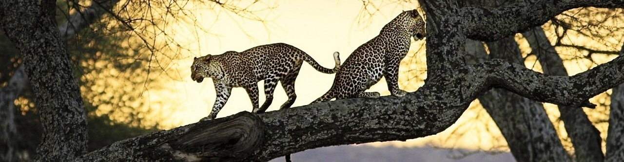 Safari Charters in Scottburgh Natal South Africa